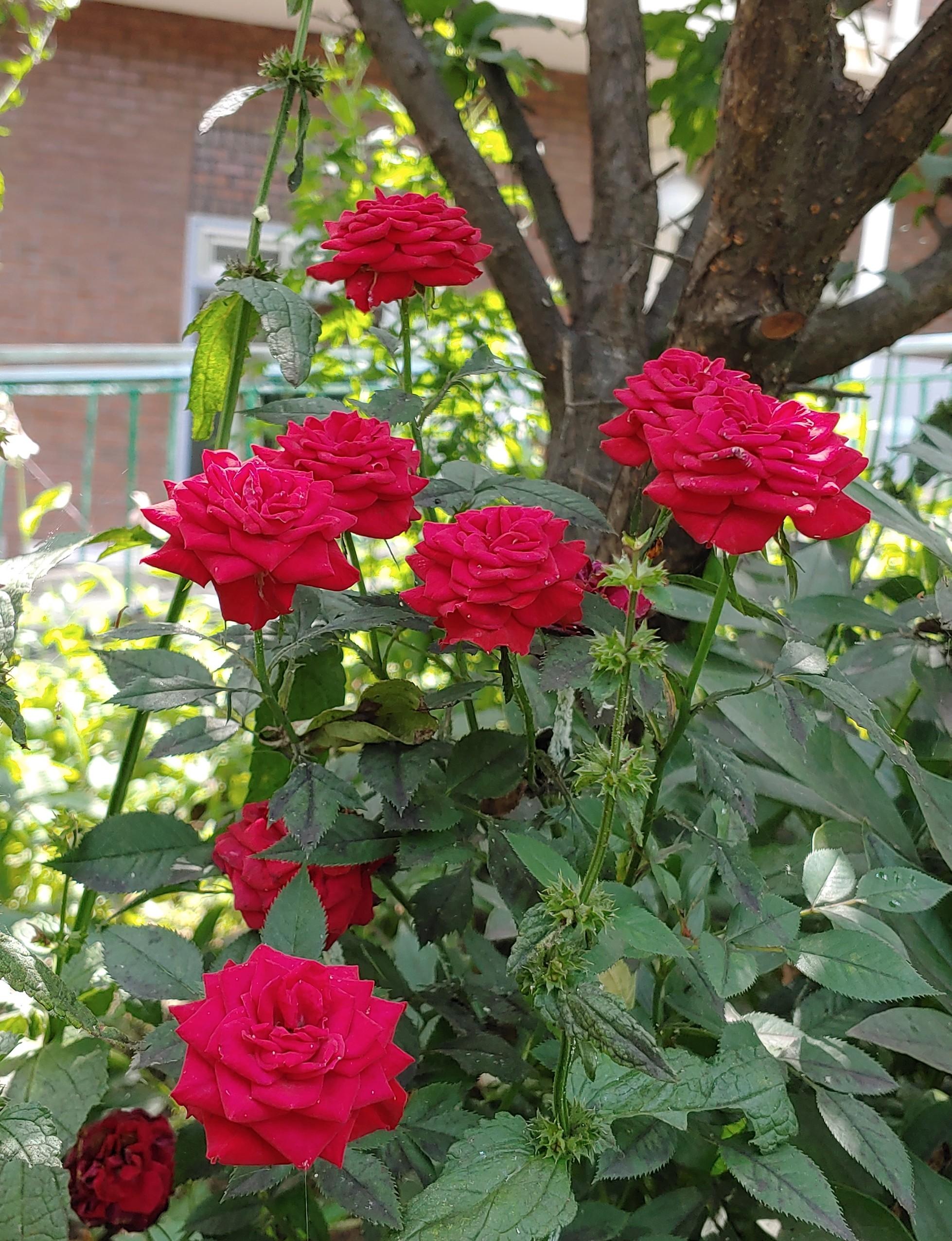 여름꽃 2